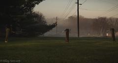IMG_1932 (hillarycharris) Tags: morning trees mist nature fog sunrise canon landscape outdoors foggy tamron morningmist naturephotography morningfog mistymorning treesinfog foggytrees foggylandscape sunrisephotography treesinmist mistylandscape canonrebelt5 canoneost5