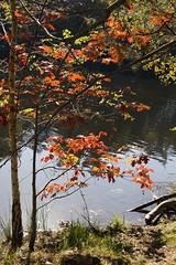Autumn colours (Wookiee!) Tags: autumn herfst color kleur colours kleuren nature natuur art kunst light licht trees bomen water lake meer creative creatief raw unpolished canon d550 dslr 35mm lens the netherlands nederland nl drunense duinen noordbrabant wwwgevoeligeplatennl herbst