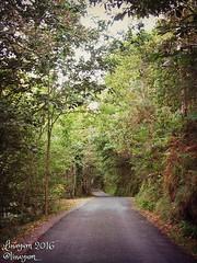 (Linayum) Tags: bosque rbol tree nature naturaleza carretera camino road plants plantas fragasdoeume galicia spain espaa