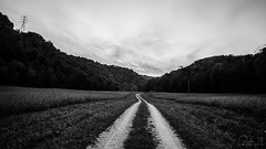 Darkened Woods (Capture Lights) Tags: bw dark dirtroad forest indiana landscape path ricohgr scary woods