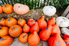 Pumpkins priced at the Greenhouse (hz536n/George Thomas) Tags: 2016 cs5 canon canon5d ef1740mmf4lusm michigan ogemawcounty westbranch copyright fall sign tree upnorth pumpkin westbranchgreenhouse