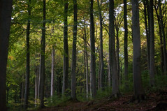 Rugen Forest (DidaK) Tags: germany forest rugen trees balticsea nationalpark