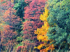 This beauty leaves me in awe... (Lana Pahl / Country Star Images) Tags: petalsandfrost naturephotography foreverautumn flickrnature fabulousfoliage fstopnaturelandscape colorsoftheworld autumnseason autumncolors