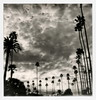 Muertos Palms (tobysx70) Tags: the impossible project tip polaroid slr680 frankenroid sx70 door rollers bw blackandwhite film for 600 type cameras instant impossaroid dia de los muertos celebration palms hollywood forever cemetery santa monica blvd boulevard angeles la california ca palm trees clouds cloudporn silhouette route 66 rt rte mint lens set yellow filter toby hancock photography