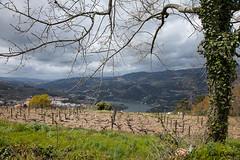 Douro valley (JOAO DE BARROS) Tags: douro river landscape portugal joo barros vineyards