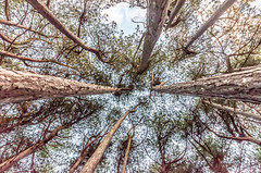 DSC_1272 (Andrew J Horrocks) Tags: formby pinewoods freshfield liverpool trees