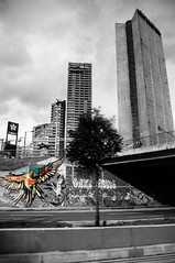 Bogot City (Angelo Petrozza) Tags: selective colours colombia bogot blackandwhite biancoenero bw pappagallo parrot pentax streetphotography way strada highway tree albero panning grattacieli building skyscrapers angelopetrozza murales