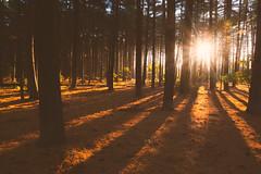 Ortus (DJawZ) Tags: autumn fall nj new jersey sunrise forest trees light shadows flare fuji fujifilm haze fog