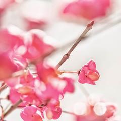 Beautiful autumn flower (susacu) Tags: high key crazy tuesday 7dwf flower autumn