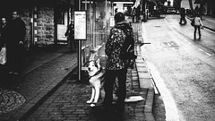 Spotted Me (Ian Livesey) Tags: kendal cumbria streetogs streetphotography photos flickr man husky dog england northwest street201520161119kendalstreetphotographytype