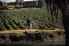 Ägypten 1999 (476) Luxor: Busfahrt nach Dendera (Rüdiger Stehn) Tags: busfahrt menschen leute afrika ägypten egypt nordafrika 1999 winter urlaub dia analogfilm scan slide 1990er 1990s oberägypten südägypten aṣṣaʿīd diapositivfilm analog kbfilm kleinbild canoscan8800f canoneos500n 35mm luxor مصر wasser landschaft الأقصر aluqṣur reise reisefoto rüdigerstehn