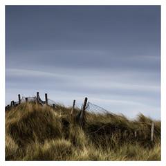 wind 48/52 week challenge (Sigita JP) Tags: wind air 52weekchallenge week48 elements grass longexposure square