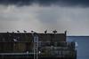 Birds gathering under a dark Sky (Infomastern) Tags: smygehuk bird fã¥gel pier pir pirarm