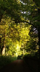 Evening Light (zoeboulton) Tags: pathway footpath park trees spring evening golden warwickshire england nature