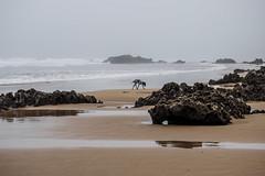 Día de perros (javipaper) Tags: sea mar nublado niebla beach perro dog gris