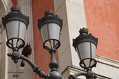 Rapace! ( photopade (Nikonist)) Tags: rapace oiseau luminaire nikon nikond300 imac affinityphoto