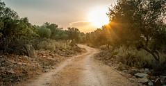Chasing the sun (Nick Panagou) Tags: sunset sky sunsetlight nature naturegreece light landscape thessaly tree trees rocks rock road pelion path bestshotoftheday bestphotographer greece greatphotographers contrast canon400d clouds cloudysky colours summer magnesia mountains mtpilion