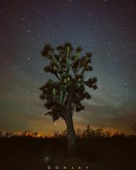Joshua Tree in the Color of Night (DonjayPhotos) Tags: joshuatree night nightphotography nightsky stairs arizona desert lonetree