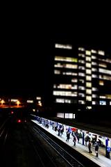 Commuting (marshall_eleanor) Tags: commuting work harrogate autumn winter cold train trains trainstation