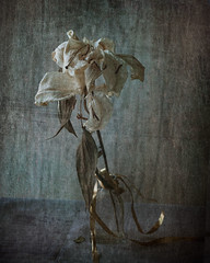 Una maana triste (saparmo) Tags: naturaleza muerta texturas bodegn flores secas
