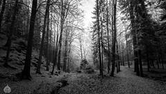 Promenons-nous dans les bois (stram36) Tags: canon eos 100d automne autumn soe tokina 1116mm bois wood deep nature chamonix landscape paysage