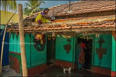 Cat.  Somnathpur (Claire Pismont) Tags: asie asia inde india cat home house woman women rooftop documentory travel travelphotography pismont clairepismont karnataka somnathpur color colour village