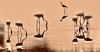 Matrix. (Carlos Arriero) Tags: matrix nature naturaleza carlosarriero nikon sepia agua water valencia laalbufera flamencos flamingos ave bird pájaros reflejo reflections sigma españa spain contemplar see europa europe 120400mm neogeo d800e