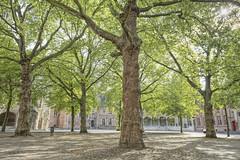 Memory square (dejongbram) Tags: trees tree abbey square memory middelburg plataan abbeysquare sycamoretree abdijplein