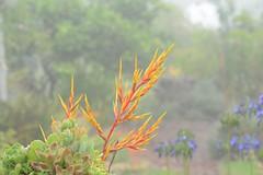 Rain Shower 4 (Unbeknownst808) Tags: trees wet leaves rain shower hawaii farm branches lavender maui foliage bushes alii kula yellowplant redplant