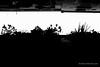 Barcelona-2015-04-25_11-17-50.jpg (Morten Mitchell Larød) Tags: barcelona street city urban bw monochrome 35mm blackwhite fuji candid citylife fujifilm streetphoto nocrop ux streetphography schibsted 500px niksilverefex x100t