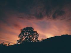 As amaneci un da de agosto en Envigao. (PabloCastro.) Tags: sunrise arbol colombia el amanecer silueta antioquia guayacan envigado escobero