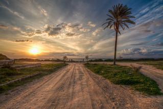 Palm & sun