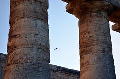 DSC_0013-001 (caterinaavino) Tags: temple ancient columns classics sicily classical sicilia segesta mozia mothia motya