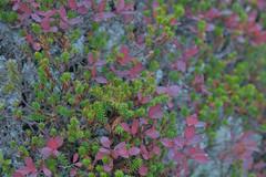 Yatsugatake004 (Kosei.S) Tags: autumn mountain fall nature japan landscape japanese nikon asia nagano d800 yatusgatake