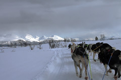 Tromso dog sledding 8 (novarex1) Tags: dog snow norway landscape sledding sleds hurtigruten