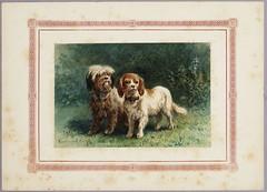 Album Amicorum (Regionaal Archief Alkmaar Commons) Tags: dogs alkmaar toussaint archief honden albumamicorum bosboom schrijfster