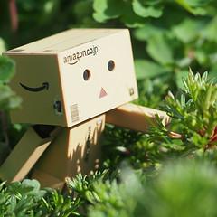 Danbo in the jungle (Jam-Gloom) Tags: field garden toy amazon bokeh olympus jungle jp figure figurine depth danbo amazoncojp revoltech danboard toyography olympusomd olympusomdem5