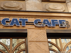 Cat cafe in Lviv (kasia_victor) Tags: cats lviv ukraine