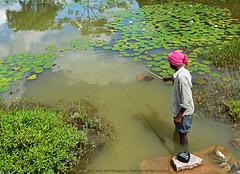 CATCHING THE CLOUDS (GOPAN G. NAIR [ GOPS Photography ]) Tags: lake fish rural photography fishing pond village lotus side country karnataka gops gopan gopsorg gopangnair gopsphotography