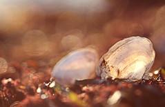 Als ich hier am Strand eingedst bin und in einem viel vertrumteren Paralleluniversum aufwachte. (Manuela Salzinger) Tags: autumn sunset sea evening abend meer sonnenuntergang herbst balticsea rgen ostsee dranske