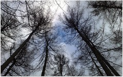 (Riik@mctr) Tags: trees winter plant tree forest nokia woods phone cheshire outdoor fone styal n95
