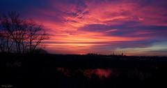 Boston at Sunrise   (Explore) (Harry Lipson III) Tags: morning pink sky panorama cloud reflection silhouette boston skyline clouds sunrise landscape dawn pond skies panoramic daybreak bostonskyline harrylipsoniii harrylipson