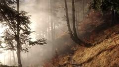 Alter Schlag (bookhouse boy) Tags: mist mountains alps forest woods nebel berge alpen phonecamera wald handycam achensee karwendel pertisau achental 2015 feilkopf ebenamachensee 2dezember2015