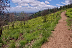 Grassy bald at Bunya Mountain (Tatters ) Tags: grass landscape path australia queensland grassland bunyamountainsnationalpark oloneo bunyamnp