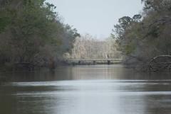 DSC03915 (2) (Theresa Kay) Tags: beach water reflections bayou illusions cypresstrees waterscenes sceneslandscape taylorbayou
