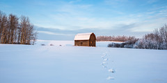 My Favourite Barn (Explored) (WherezJeff) Tags: winter cloud snow canada abandoned animal barn forest tracks deer alberta elk forests goldenhour sturgeoncounty