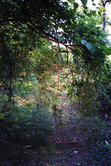 (Lesley Rivera) Tags: old summer color green film nature leaves 35mm canon landscape kodak bokeh branches frame greenery
