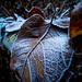 Leaves_9479