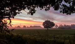 Framed Sunrise (Rob Pitt) Tags: misty sunrise colour tree autumn wirral way cheshire clouds