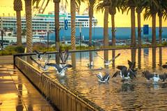 3782.1 (Michael F. Nyiri) Tags: sanpedroca southerncalifornia california harbor losangelesharbor sunrise morning clouds birds